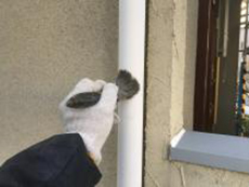 横浜市 住宅塗装 竪樋 塗り替え 清掃